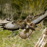 Wildlife Photography – Fulfilling Your Passion
