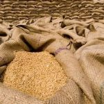 Centre hikes MSP for Wheat and Pulses