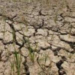 Drought-hit areas in Odisha to be declared by Oct 30