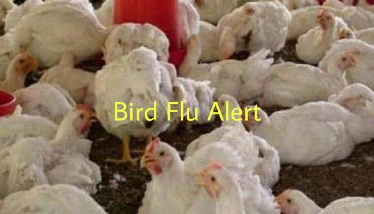 India: High alert against Bird Flu