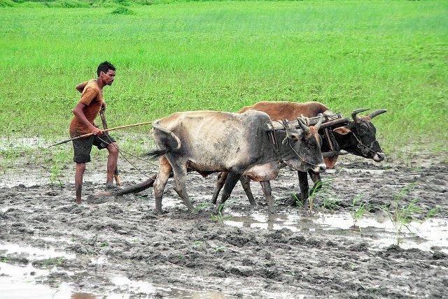 Odisha CM announces financial assistance for Cyclone Yaas hit Farmers