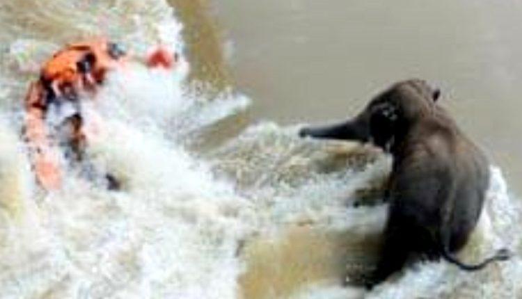 Mundali Boat Tragedy Odisha